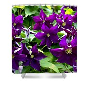 Clematis Flowers Shower Curtain by Corey Ford