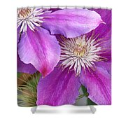 Clematis Flowers Shower Curtain