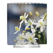 Clematis II Shower Curtain