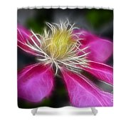 Clematis In Pink Shower Curtain