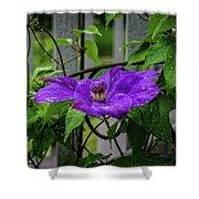Clematis In Purple Shower Curtain