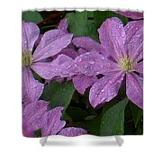 Clematis In The Rain Shower Curtain