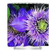 Clematis Multi Blue Shower Curtain