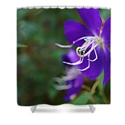 Clematis On The Side Shower Curtain