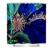 Clematis Regal In Purple And Blue Sold Shower Curtain