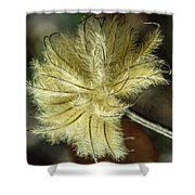 Clematis Seed Head 1 Shower Curtain