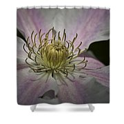 Clematis Study 1 Shower Curtain