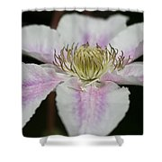 Clematis Study 2 Shower Curtain