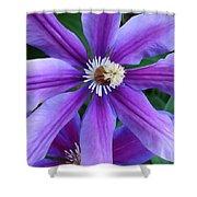 Clematis Vine Shower Curtain
