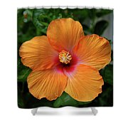 Clementine Hibiscus Shower Curtain