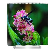 Clethra And Wasp Shower Curtain