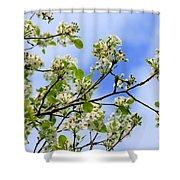 Flowering Pear Shower Curtain