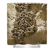 Cliff Swallow Hirundo Pyrrhonota Nests Shower Curtain