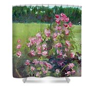 Climbing Roses At The Rose Gardens Shower Curtain