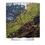 Climbing Tree Roots Shower Curtain