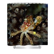 Clinging Crab On Sea Rod Shower Curtain