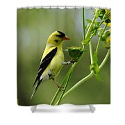 Clinging Goldfinch Shower Curtain