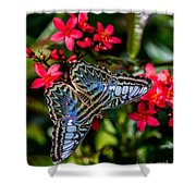 Clipper Butterfly 1 Shower Curtain
