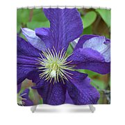 Close Clematis Shower Curtain
