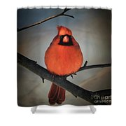 Close Encounter On A Blustery Day Shower Curtain by Lois Bryan