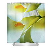 Close Up Calla Lilies Shower Curtain