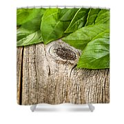 Close Up Fresh Basil Leafs On Rustic Wooden Boards Shower Curtain