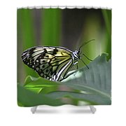 Close Up Look At A Paper Kite Butterfly On Foliage Shower Curtain