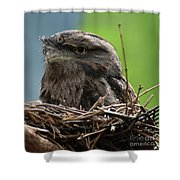 Close Up Look At A Tawny Frogmouth Sitting In A Nest Shower Curtain