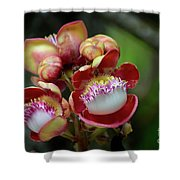 Close-up Macro Of Flower And Fruit Of Cannonball Tree Shower Curtain