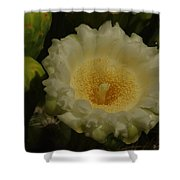 Close Up Of A Cactus Bloom. Shower Curtain
