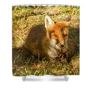 Close-up Of A Fox Resting In A Park Shower Curtain
