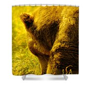 Close Up Of A Grizzily Shower Curtain