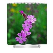 Close Up Of A Least Primrose Flower Shower Curtain