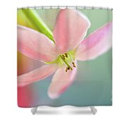 Close Up Of A Pink Flower Shower Curtain