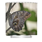Close Up Of A Pretty Brown Morpho Butterfly  Shower Curtain