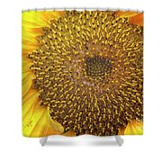 Close Up Of A Sunflower Head Shower Curtain