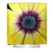 Close-up Of A Yellow African Daisy Shower Curtain