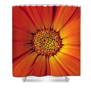 Close Up Of An Orange Daisy Shower Curtain