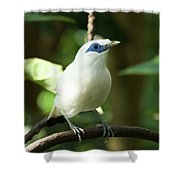 Close-up Of Bali Myna Bird In Trees Shower Curtain