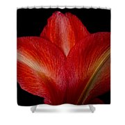 Close-up Of Colorful Amaryllis Flower Petals Shower Curtain