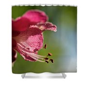 Red Horsechestnut Flower Shower Curtain