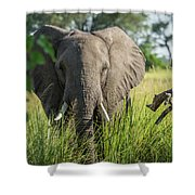 Close-up Of Elephant Behind Bush Facing Camera Shower Curtain