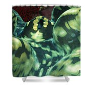 Close-up Of Giant Clam, Tridacna Gigas Shower Curtain