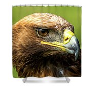 Close-up Of Golden Eagle With Turned Head Shower Curtain