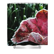 Close Up Of Leaf And Frost Shower Curtain