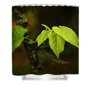 Close Up Of Leaves In Forest Shower Curtain