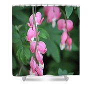 Close Up Of Peacock Pink Bleeding Hearts On Hunter Green Foliage 2 Shower Curtain
