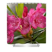 Close-up Of Pink Horatio Flowers Shower Curtain
