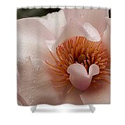 Close-up Of Pink Ladies Flowers Shower Curtain