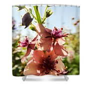 Close-up Of Pink Mullein Flowers Shower Curtain